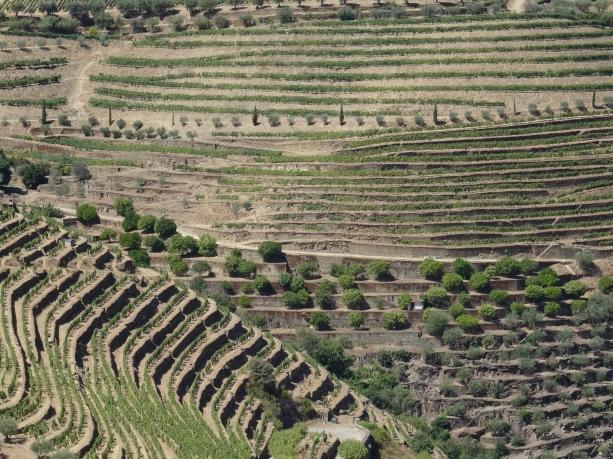 20 - Vigneti nellla regione del Douro DSC00713